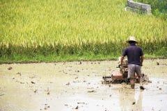 Agricoltura cinese del riso Fotografie Stock Libere da Diritti