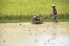 Agricoltura cinese del riso Fotografia Stock Libera da Diritti