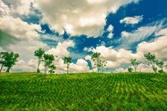 Agricoltura collinare Fotografia Stock Libera da Diritti