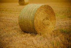 Agricoltura, coltivante, ecologia fotografia stock