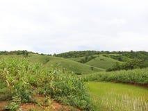 Agricoltura convenzionale Fotografia Stock Libera da Diritti