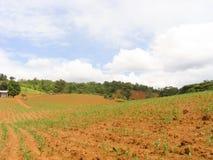 Agricoltura convenzionale Fotografie Stock Libere da Diritti