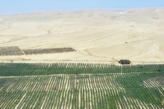 Agricoltura - crescendo nel deserto Fotografia Stock
