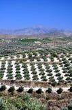 Agricoltura in Crete, Grecia. immagini stock
