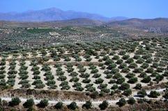 Agricoltura in Crete, Grecia. fotografie stock libere da diritti