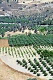 Agricoltura in Crete, Grecia. immagine stock