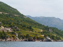 Agricoltura croata sulla penisola Peljesac Fotografia Stock Libera da Diritti