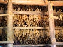 Agricoltura in Cuba Fotografia Stock