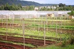 Agricoltura in Cuba Immagine Stock Libera da Diritti