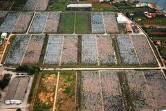 Agricoltura dal cielo Immagini Stock