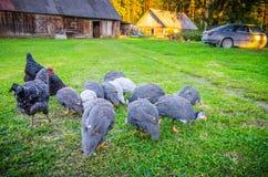 Agricoltura degli uccelli fotografia stock libera da diritti