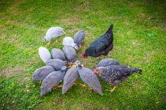 Agricoltura degli uccelli fotografia stock