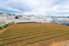 Agricoltura dei lotti in montagna Vietnam Immagini Stock Libere da Diritti