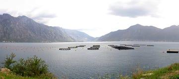 Agricoltura dei pesci Montenegro Fotografia Stock Libera da Diritti
