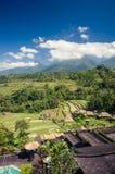 Agricoltura dei terrazzi del riso in Bali, l'Indonesia Immagini Stock Libere da Diritti