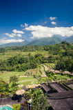 Agricoltura dei terrazzi del riso in Bali, l'Indonesia Fotografia Stock Libera da Diritti