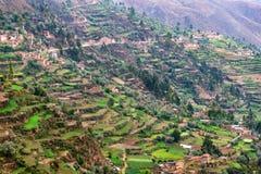 Agricoltura dei terrazzi nel Perù Fotografia Stock Libera da Diritti