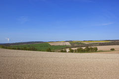 Agricoltura dei wolds di Yorkshire Fotografie Stock