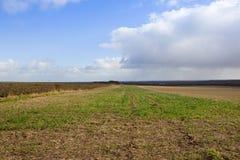 Agricoltura dei wolds di Yorkshire Immagine Stock Libera da Diritti