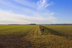 Agricoltura dei wolds di Yorkshire Fotografia Stock