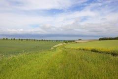 Agricoltura dei wolds di Yorkshire Immagini Stock Libere da Diritti