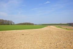 Agricoltura dei wolds di Yorkshire nella primavera Immagine Stock Libera da Diritti