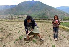 Agricoltura del Bhutan Fotografia Stock Libera da Diritti