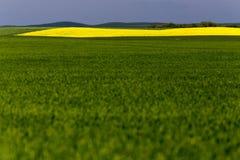 Agricoltura del campo di Saskatchewan Immagini Stock Libere da Diritti
