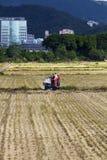 Agricoltura del campo di tolleranza Fotografia Stock