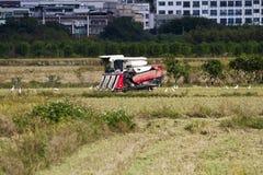 Agricoltura del campo di tolleranza Fotografie Stock Libere da Diritti