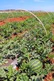 Agricoltura del Cipro Fotografia Stock Libera da Diritti