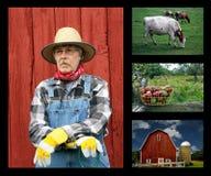 Agricoltura del collage Fotografie Stock Libere da Diritti