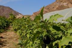 Agricoltura del deserto Immagine Stock