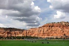 Agricoltura del deserto fotografie stock libere da diritti