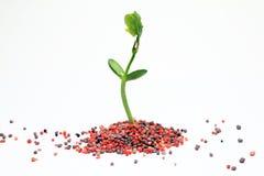 Agricoltura del fertilizzante chimico Immagine Stock Libera da Diritti