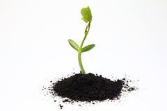 Agricoltura del fertilizzante organico Fotografie Stock Libere da Diritti