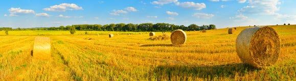 Agricoltura del fondo Immagini Stock Libere da Diritti