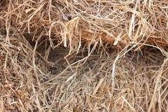 Agricoltura del fondo della paglia di riso in Tailandia Fotografie Stock Libere da Diritti