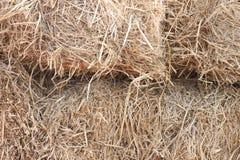 Agricoltura del fondo della paglia di riso in Tailandia Fotografia Stock