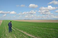 Agricoltura del grano Fotografia Stock