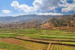 Agricoltura del Madagascar Fotografia Stock
