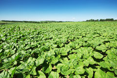 Agricoltura del paesaggio Immagine Stock