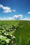 Agricoltura del paesaggio Fotografia Stock Libera da Diritti