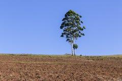 Agricoltura del paesaggio Immagini Stock