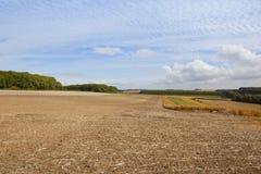 Agricoltura del paesaggio con il cielo di sgombro Fotografia Stock
