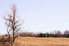 Agricoltura del paesaggio con la fila degli alberi sull'orizzonte Immagine Stock Libera da Diritti