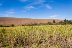Agricoltura del paesaggio dei raccolti Fotografia Stock