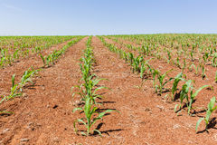 Agricoltura del paesaggio dei raccolti Immagini Stock