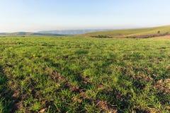 Agricoltura del paesaggio del campo di erba Fotografie Stock