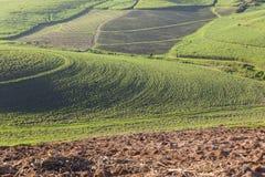 Agricoltura del paesaggio del raccolto Immagini Stock Libere da Diritti